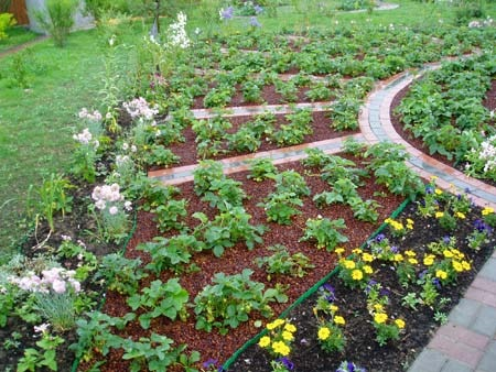 Дизайн огорода с клубникой